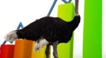 Открытие страусиной фермы: бизнес план