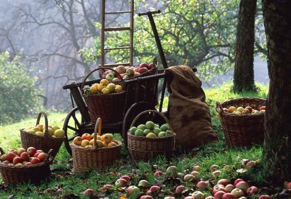 Выращивание эко-продуктов