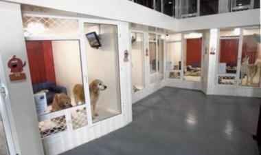 Построение бизнес плана гостиницы для животных