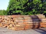 Как составить бизнес план лесопилки