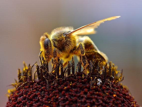 Как составить бизнес план по пчеловодству