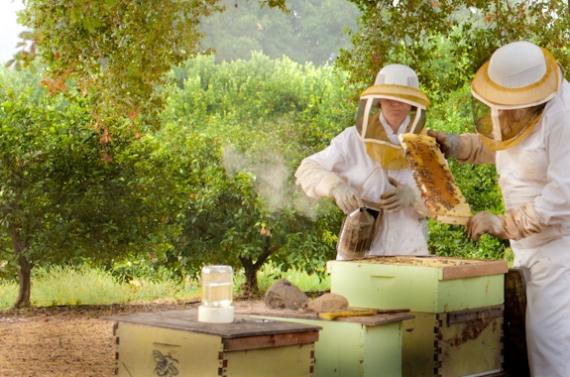 Где найти специалистов- пчеловодов