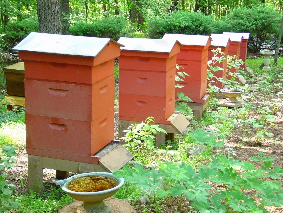 Место для пчеловодческого хозяйства