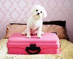 Бизнес план открытия гостиницы для животных