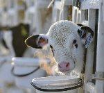 Что включает бизнес план молочной фермы