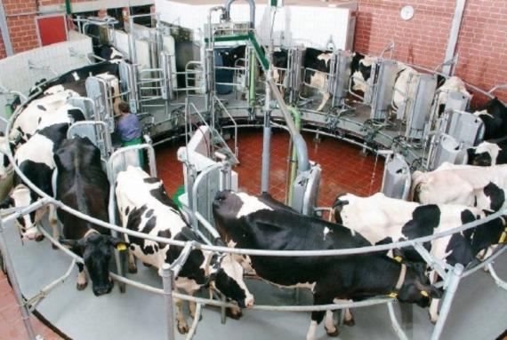 Оборудование молочной фермы