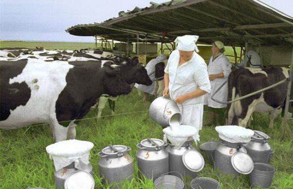 Продукция молочной фермы