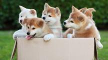 Как организовать бизнес по разведению собак