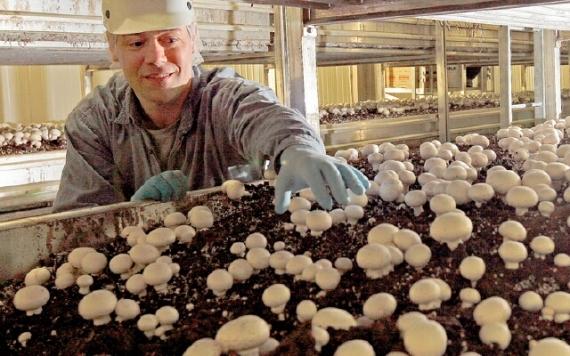 Персонал для выращивания грибов шампиньонов