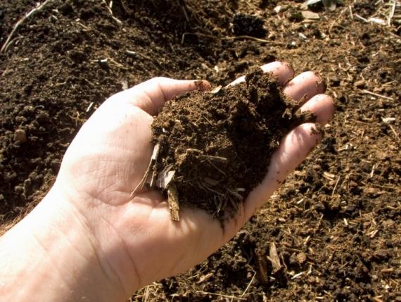 Субстрат для выращивания грибов шампиньонов
