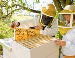 Образец готового бизнес плана по пчеловодству