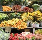 Разделы бизнес плана для магазина цветов
