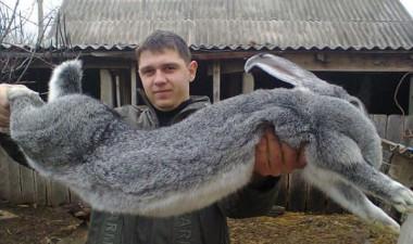 Как составить бизнес план кролиководческой фермы