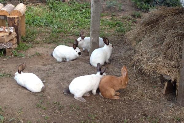Особенности вольерного содержания кроликов
