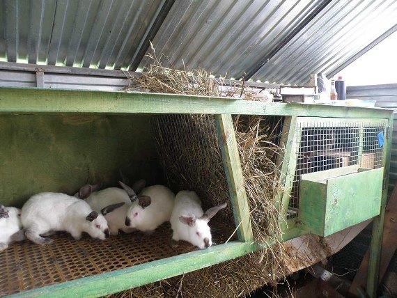Закупка оборудование для разведения кроликов
