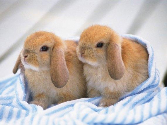 Сложности бизнеса по разведению декоративных кроликов