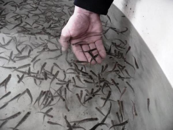 Организация бизнеса по выращиванию рыбы в подвале частного дома