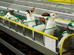 Выгодно ли разведение кроликов как бизнес