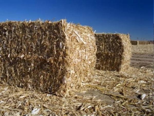 Какое сырье использовать для производства древесного угля